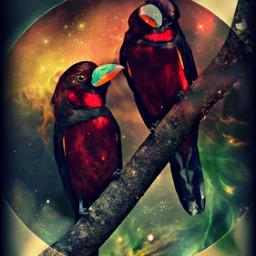 freetoedit birds branch moon petsandanimals