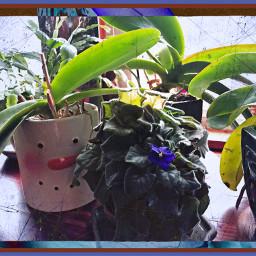 gratitudechallenge2020 myphotography nofilternoedit ipadpro plants