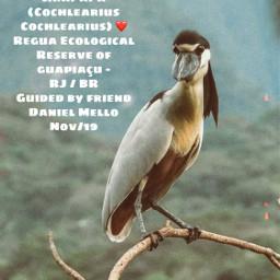 freetoedit bird petsandanimals branch funkylooking