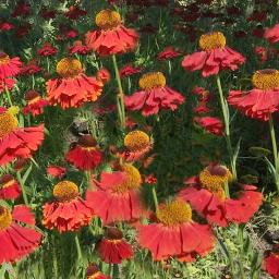 flowers flower blossom prettyflowers florals