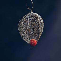 nature lantern plant dramaeffect outandabout freetoedit
