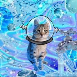 freetoedit blue cat water splash ccblueaesthetic blueaesthetic