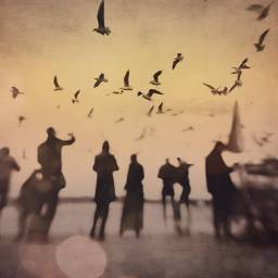 seagulls people sepia blurred