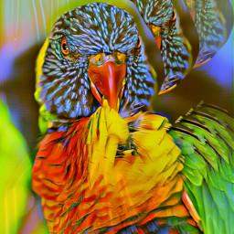 freetoedit remix picsart parrot coloreffects