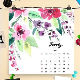 freetoedit flower sticker pine sticky srcjanuarycalendar januarycalendar