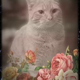 freetoedit film cat retro retroeffect