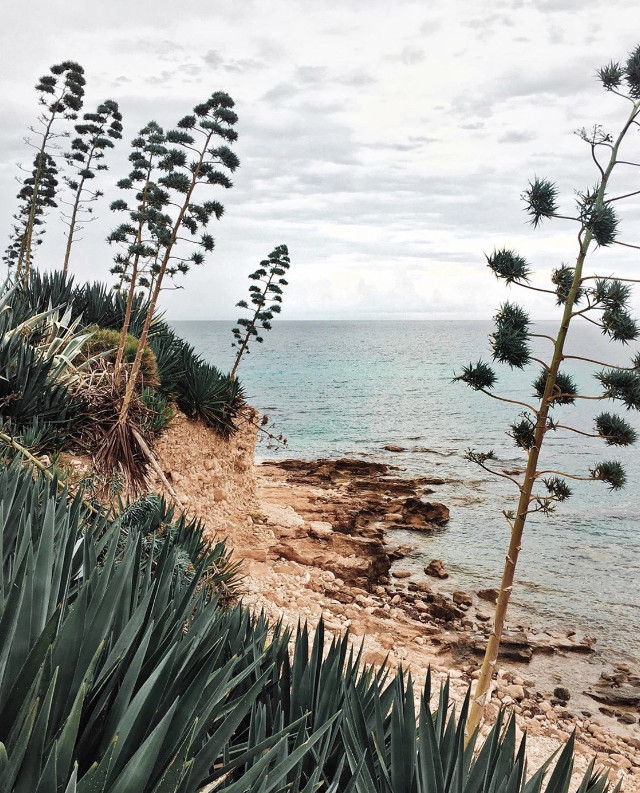 #nature #cliffside #seaview #skyandclouds #horizon #rockformations #wildplants #cactus #cactustrees #seaview #cloudyday #beachmood #lowangleshot #naturephotography   #freetoedit