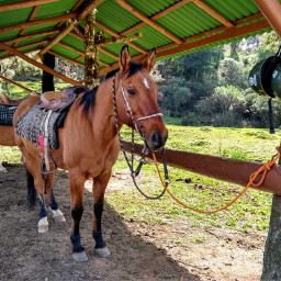 horse horses background myphoto pcpicsartpets picsartpets createfromhome stayinspired freetoedit
