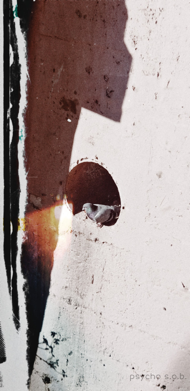 #freetoedit #pismobeach #california #winter #pigeon #fxtools #photography