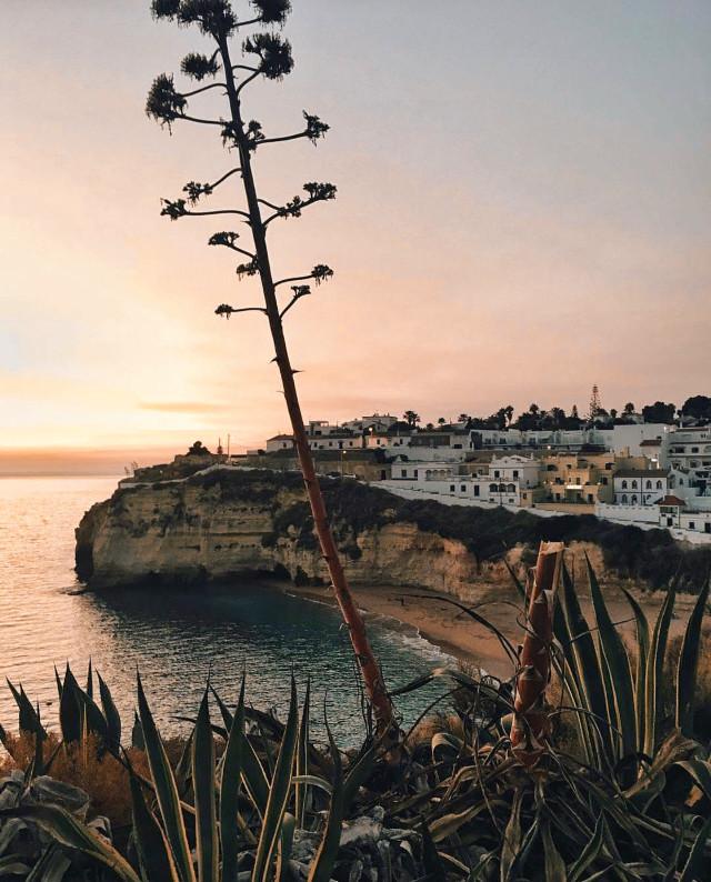 #cliff #cliffview #smallvillage #bythesea #beachview #wildplants #cactus #cactustree #lateafternoon #horizon #goldenlight #lowangleshot   #freetoedit