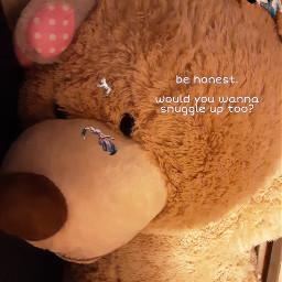 freetoedit snugglybear snuggle teddybear warmth