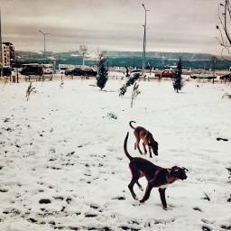 snow coldday dog straydogs doglover
