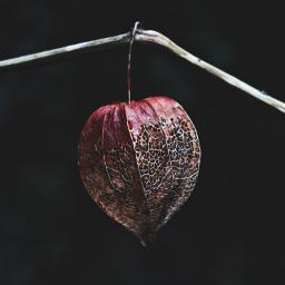 nature lantern plant dramaeffect freetoedit