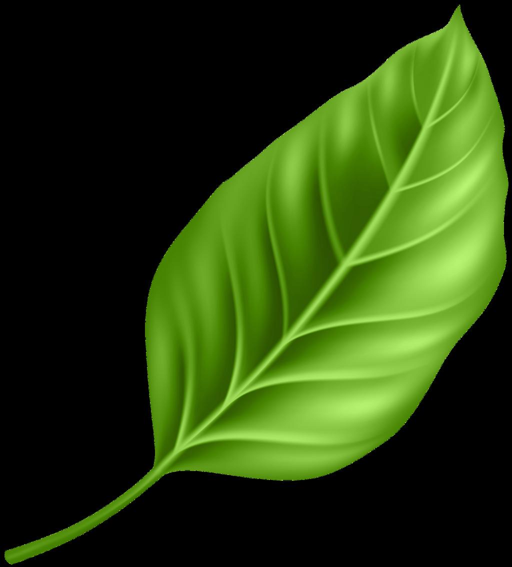 #leaf #freetoedit