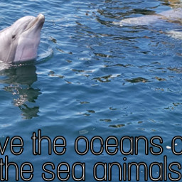 dolphin dolphins ocean sea water travel