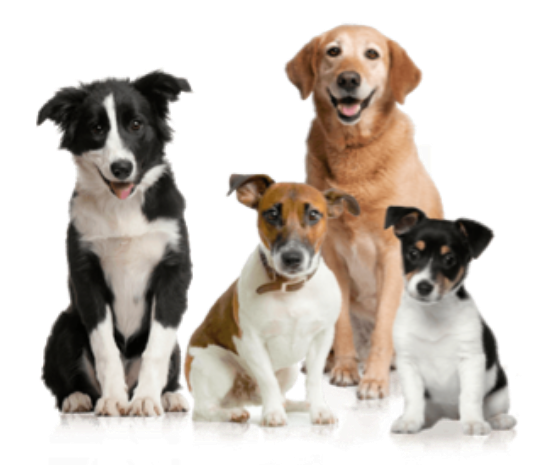 #animals #animal #dog #dogs #friends #love #nature #sticker #stickers #ftestickers #freetoedit