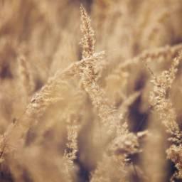 nature wildplants appreciatenaturearoundyou grass enjoythelittlethings freetoedit