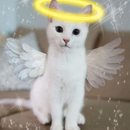 freetoedit cat cute angelic halo