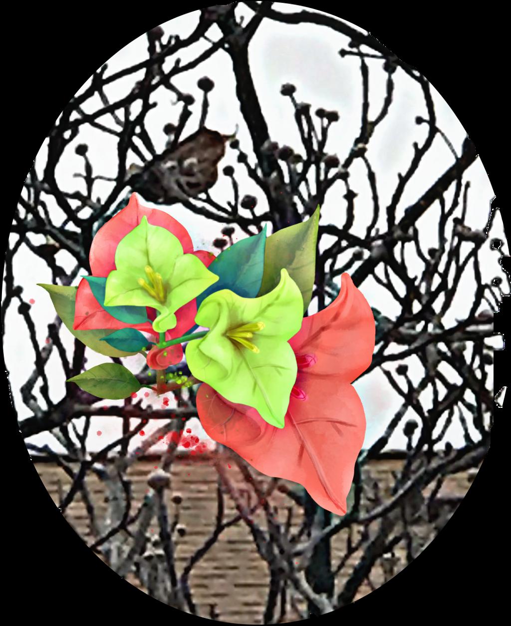 #freetoedit #tree #branches #bird #petsandanimals #flowers