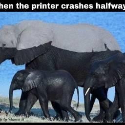 elephant printed lol freetoedit