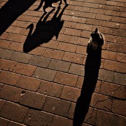 shadows cats street sunnydays