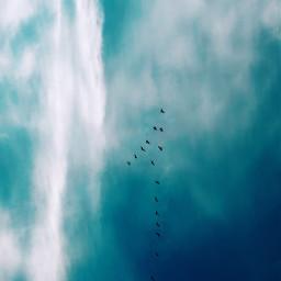 freetoedit illusion nature birdsinflight flockofbirds