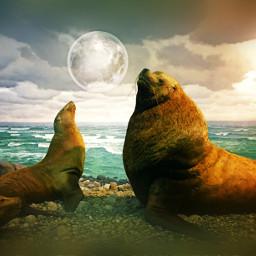 animals walrus sea moon clouds freetoedit