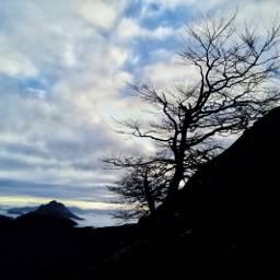 mountains nature tree freetoedit