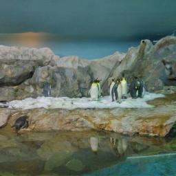 penguin birds jurongbirdpark sg
