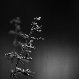freetoedit naturephotography blossom blackandwhite thelittlethings