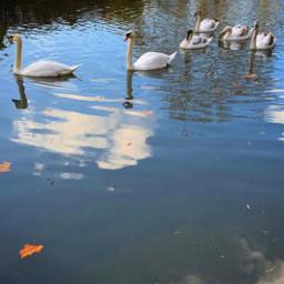 gardenwalk urbex citypark garden lake freetoedit