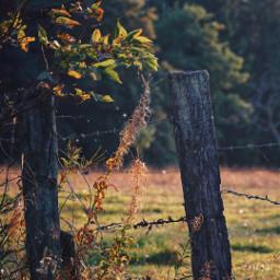 natur fence plants