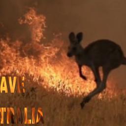 kangoroo freetoedit
