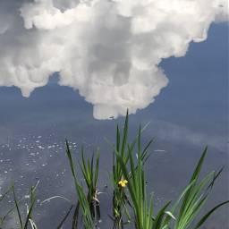 nature lakeshore reflections wildplants skyandclouds freetoedit