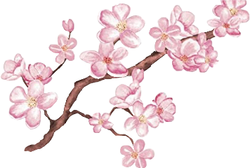flowers cherryblossoms aesthetic cute pink freetoedit