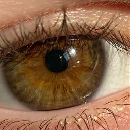 freetoedit eye eyes brown browneyes