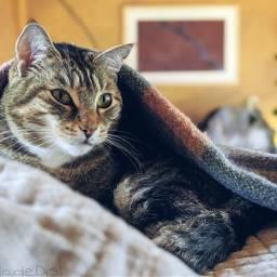 caturday myphoto mypet cats catsofpicsart