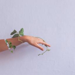 surreal arm vines vine ivy freetoedit
