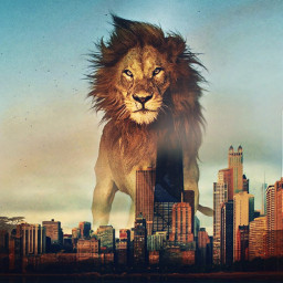 lion animal animalart art city