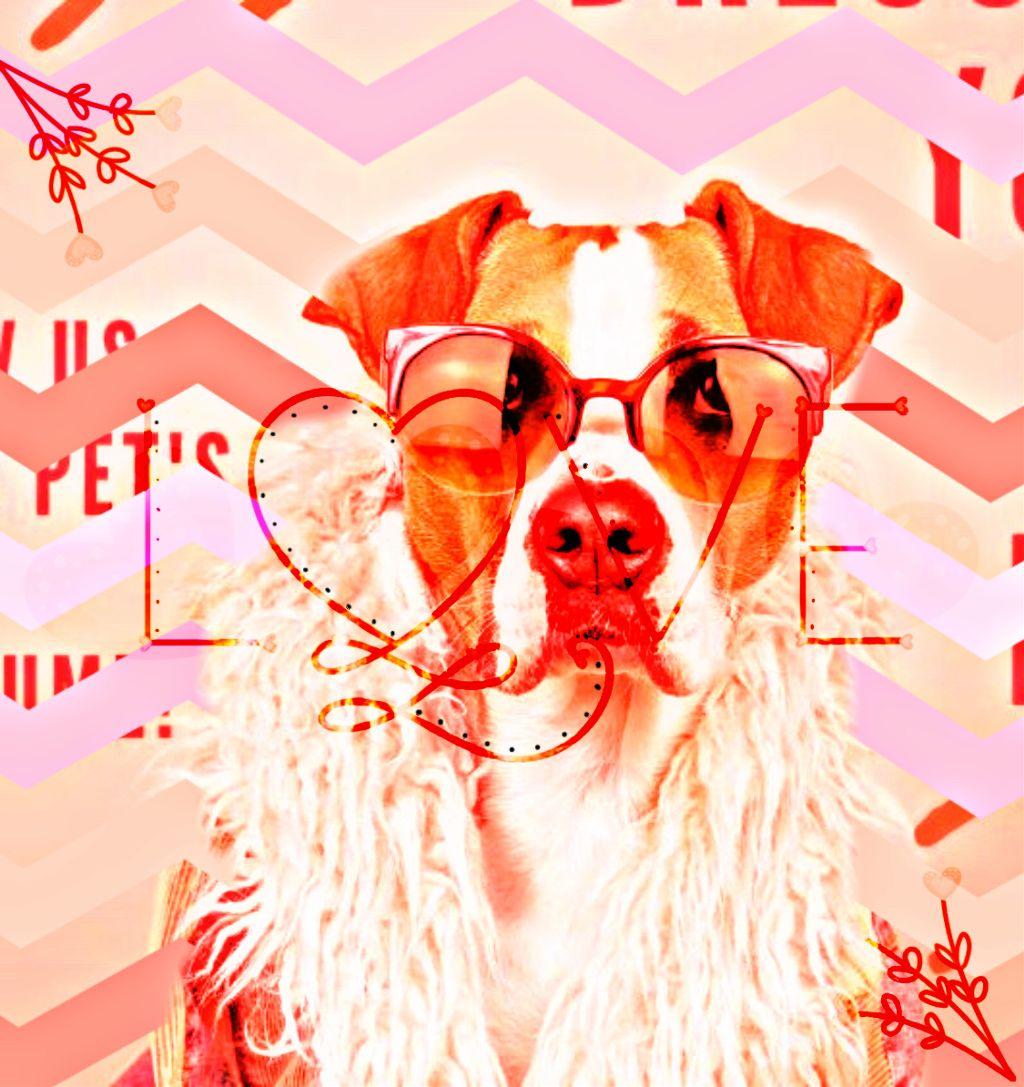 #freetoedit #love #text #quotesandsayings #petsandanimals #puppy #dog #sunglasses #curvestool #zigzag #flowers #coat #cool #cute #srczigzagpattern #zigzagpattern