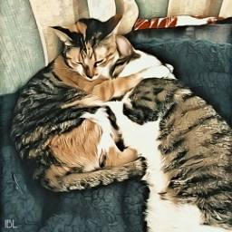 freetoedit magiceffect cats animals cute