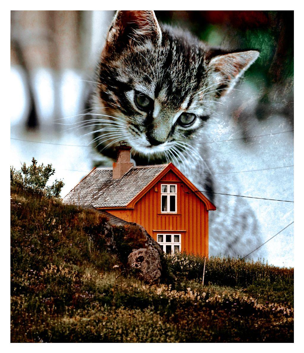 #freetoedit #home #kitten #love #lovely #cute #animal #nature #morning #spring  🌾