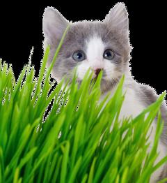 catcute grass freetoedit
