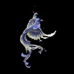 vogel bird blue blau freetoedit