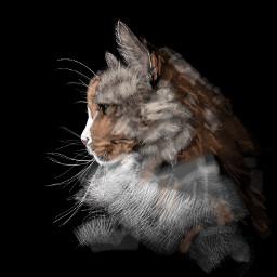 colorpaint draw portrait cat