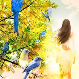 freetoedit bluebirds birds bluetit parrot