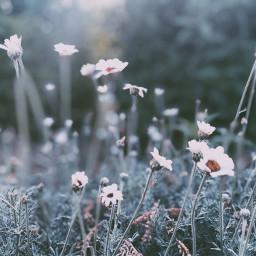 flowers floral field nature beautiful freetoedit