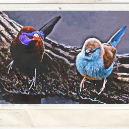 freetoedit papereffect stenciler6 birds film2effect
