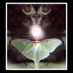2 lunas goddess moon moth freetoedit