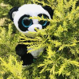 plsfollowme panda photo real fake